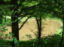 La Forêt Domaniale du Chérimont en Haute-Saône