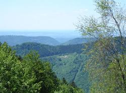 La Forêt Domaniale de Saint-Antoine